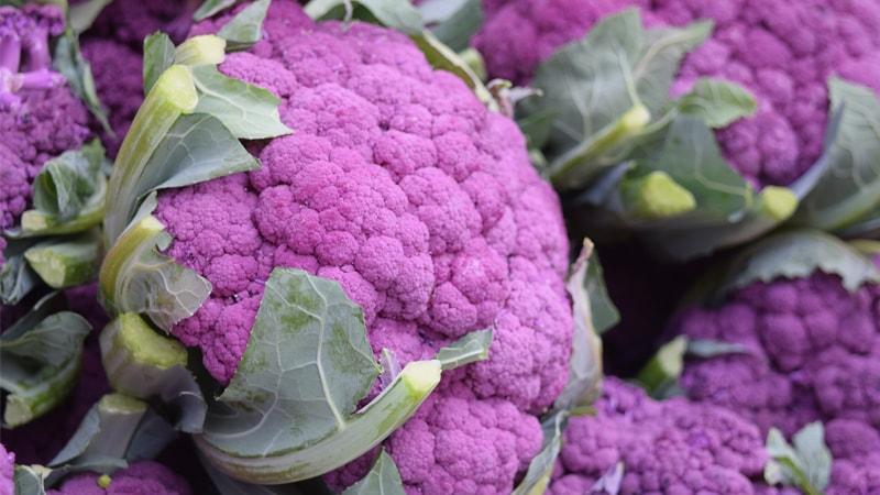 紫カリフラワーイメージ