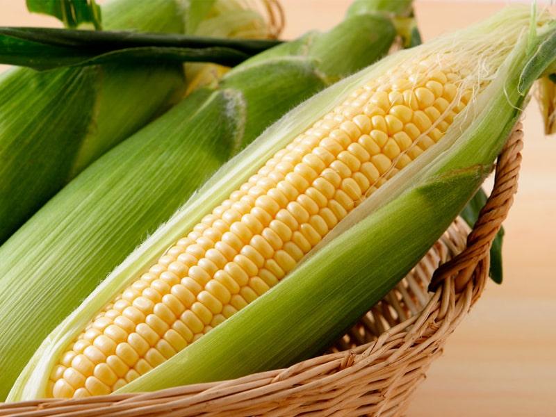 トウモロコシイメージ